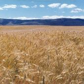 Ellensburg Wheat Farm